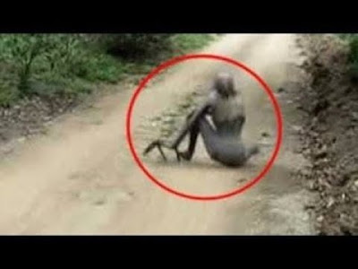 ڤیدۆ بینینی مهخلوقیكی سهیر له دارستان باوهر ناكهی چی ئهبینی به چاوهكانت