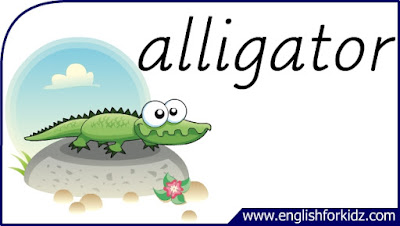 alligator flashcard