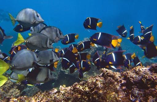 nuevas especiaes peces islas galapagos