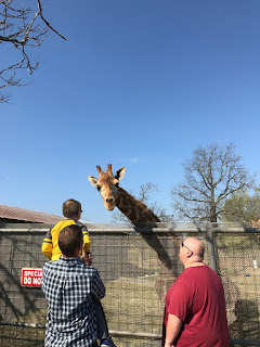 Petting the giraffe at Wild Wilderness Drive Through Safari in Gentry, Arkansas