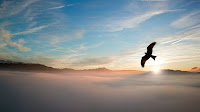 backlit bird clouds