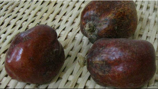gambar buah zuriat