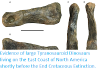 http://sciencythoughts.blogspot.com/2019/04/evidence-of-large-tyranosauroid.html