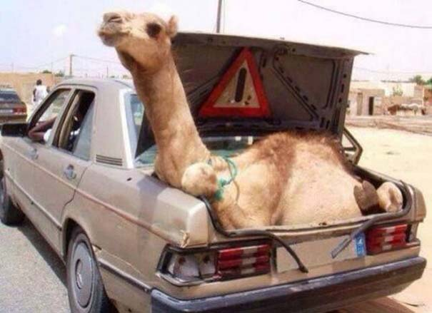 Απίθανες και τρελές καταστάσεις στους...δρόμους του κόσμου! (Pics)