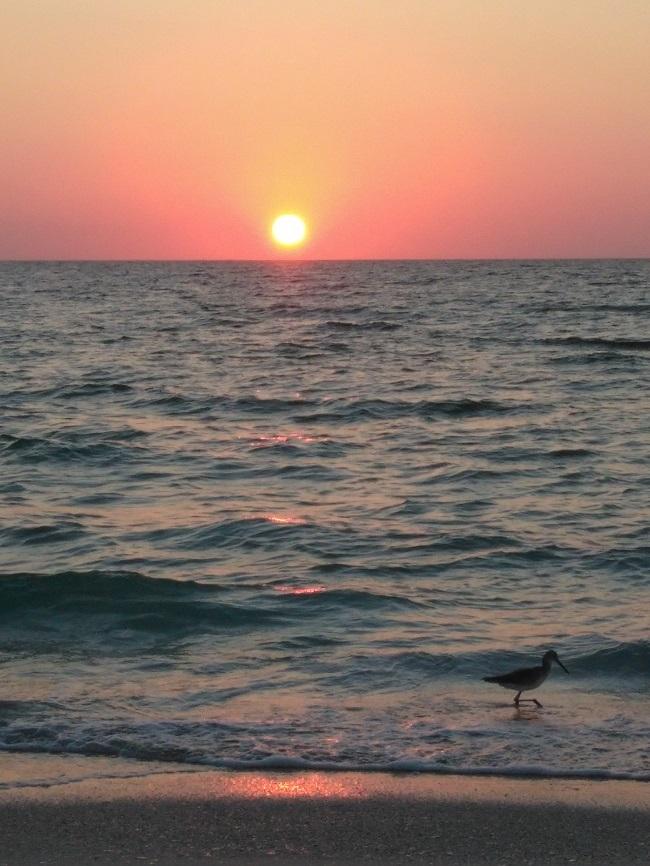 bird fishing along shore
