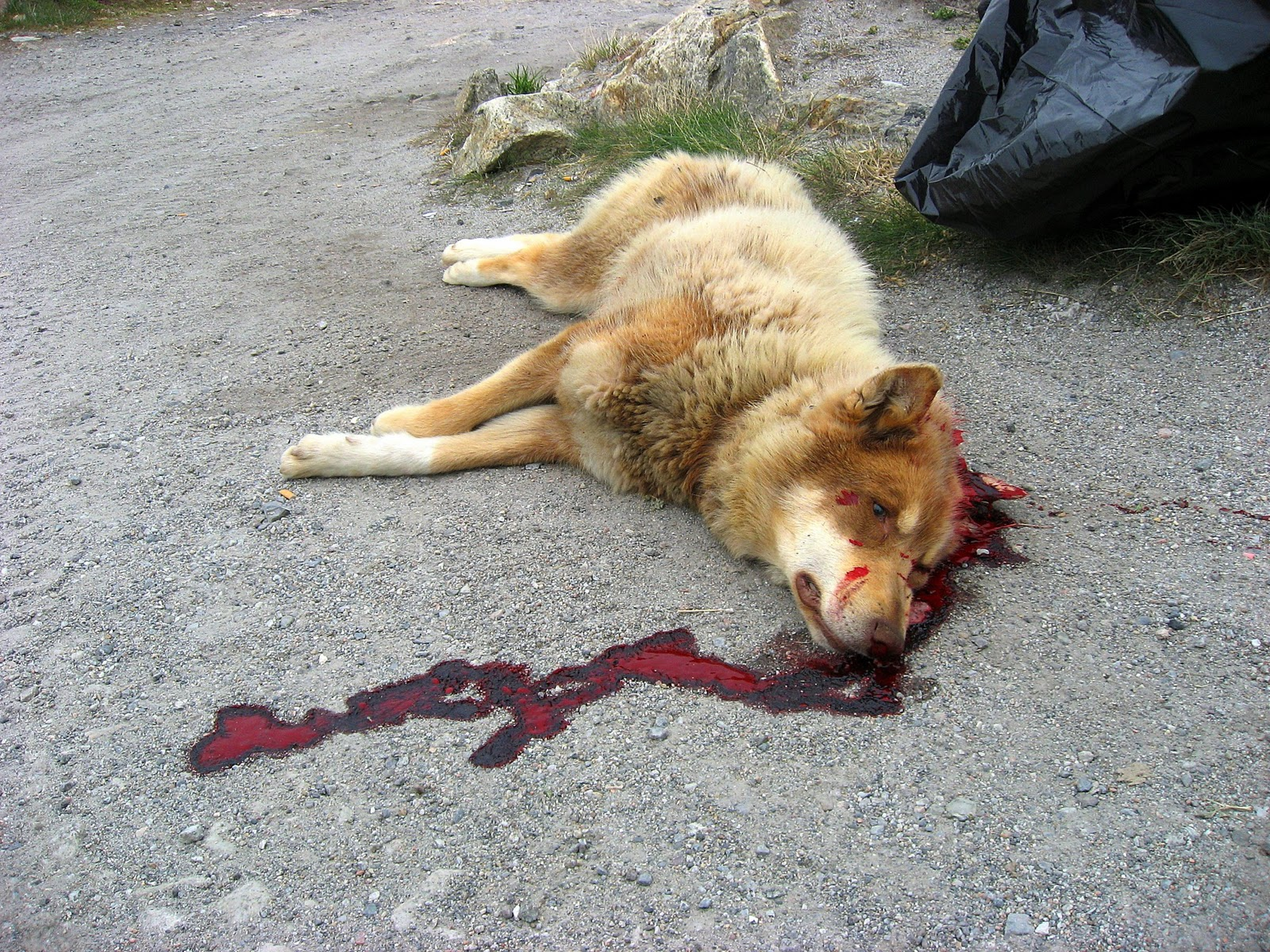 Signs Of Natural Death In Dogs