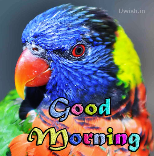 Good Morning with a beautiful colorful parrot