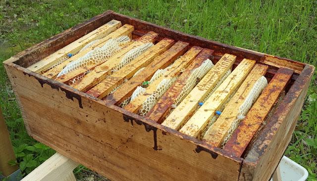 hausse et cadres d'une ruche