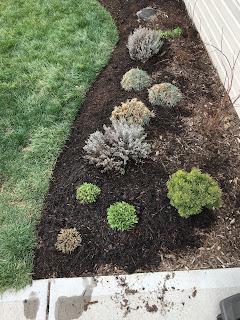 backyard move plants