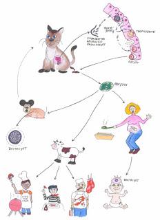 toxoplasma-gatos-parasitos-tierra-leche