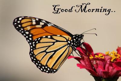 Beautiful Good Morning Pics