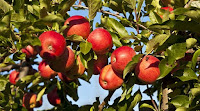 Τα μήλα αποδεικνύονται θαυματουργά