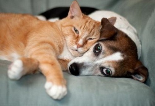 Gato e cachorro dormindo. #PraCegoVer