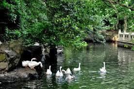 Lanting - the Goose Pond