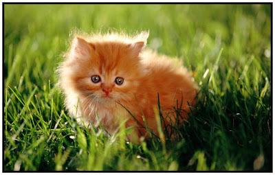 Anak+Kucing Dosa Diampuni Karena Menolong Anak Kucing