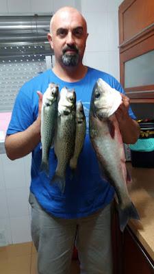 Pesca-en-Camposoto-lubina-sea-bass-robalo