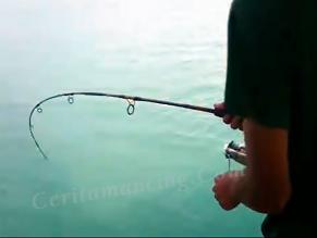 Mancing Ikan Jembelang Golden Trevally Heboh