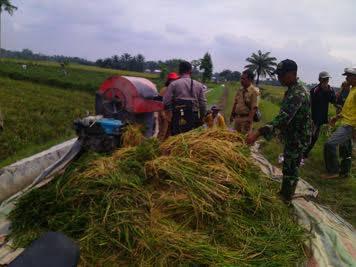 Panen Perdana di Desa Tanah Tinggi, Babinsa Koramil 02/Air Putih Serka Sunardy Lakukan Pendampingan