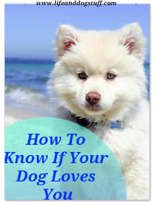 How To Know If Your Dog Loves You