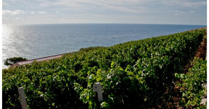 Podere Grecale - Padre, figlia ed il loro vini di mare, di vento e sole e di terra