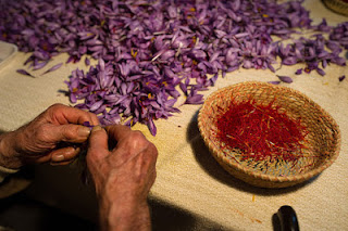 Saffron: Rp 270 juta/kg