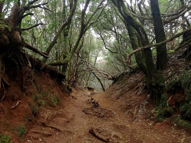 Bosque de Anaga Tenerife, Barranco, Bosque de los sentidos