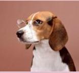 большой список фильмов про собак