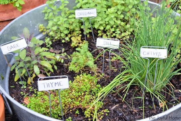 Backyard Herbs