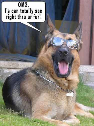 funny dog pics with guns - photo #30
