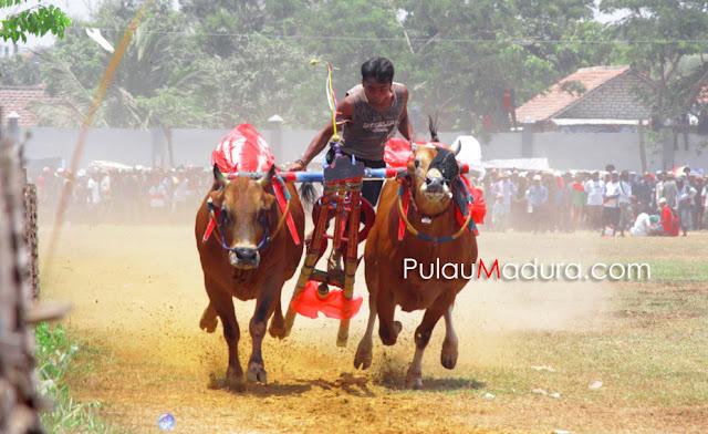 Kerapan Sapi 2015 Tingkat Kabupaten Bangkalan