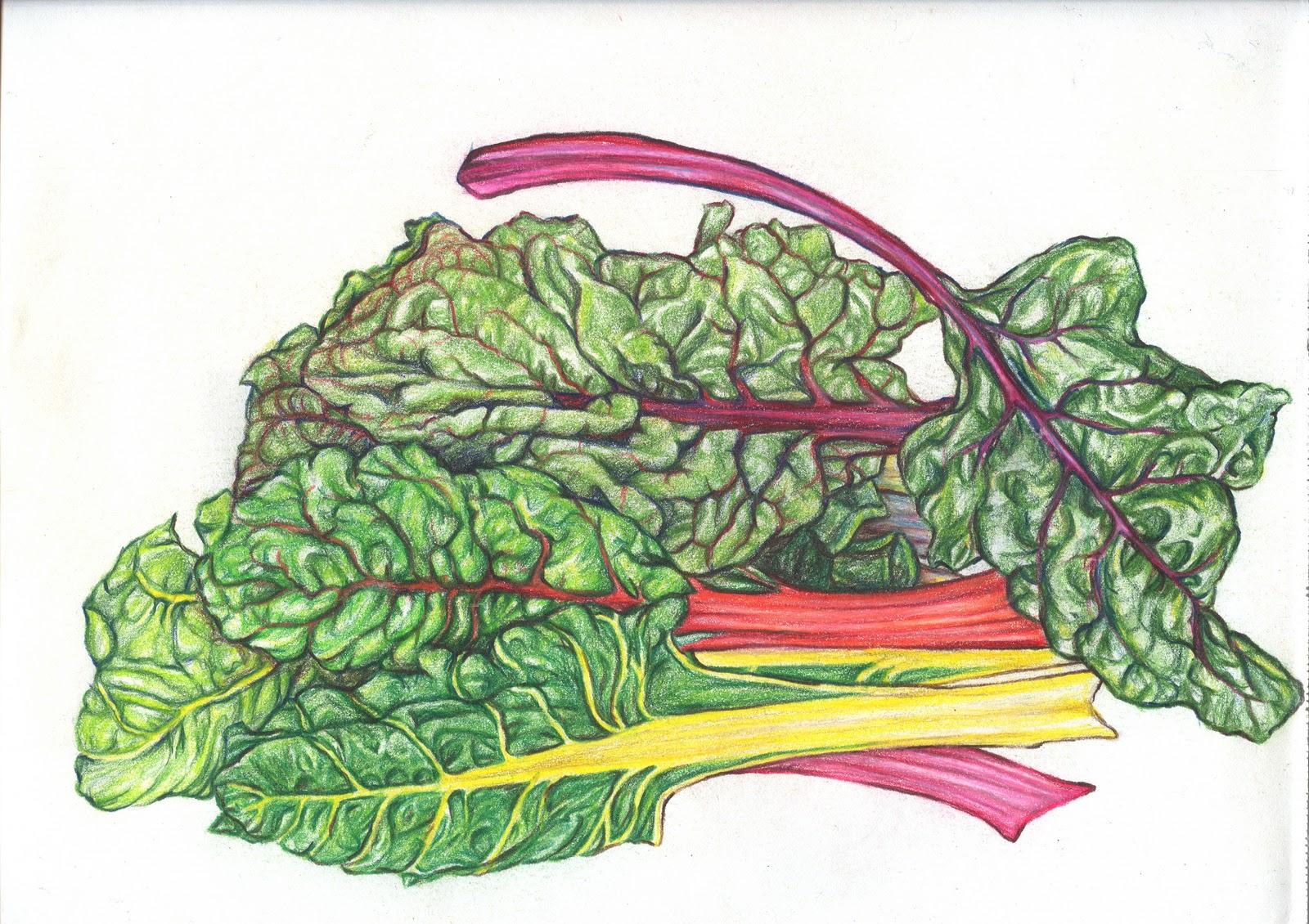 Jessie S Art Rainbow Chard