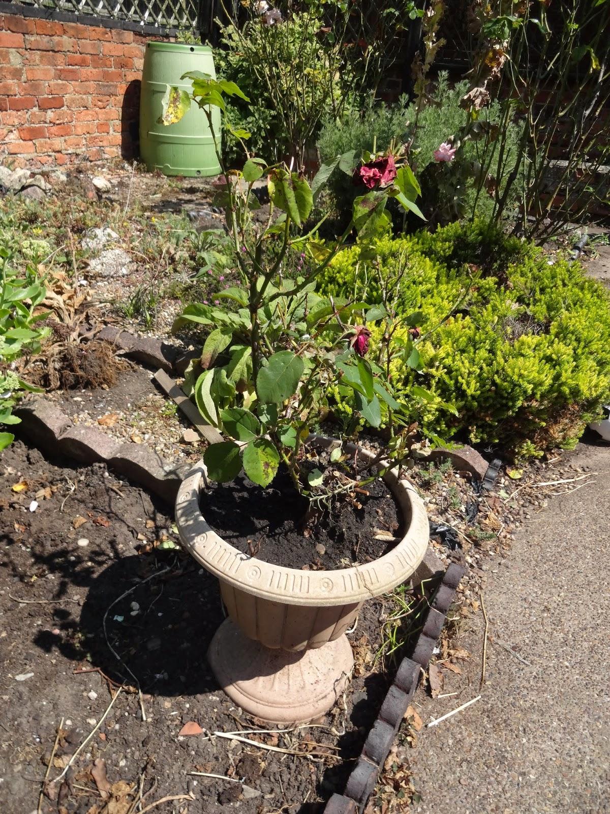 garden renovation blog