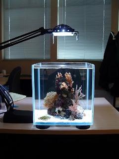Bentuk Aquarium