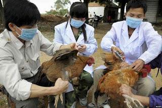 Kementan Larang Pemasukan Unggas dari malaysia Terkait Wabah Flu Burung
