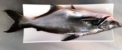 Ketahui Jenis Ikan Yang Sering Di Konsumsi