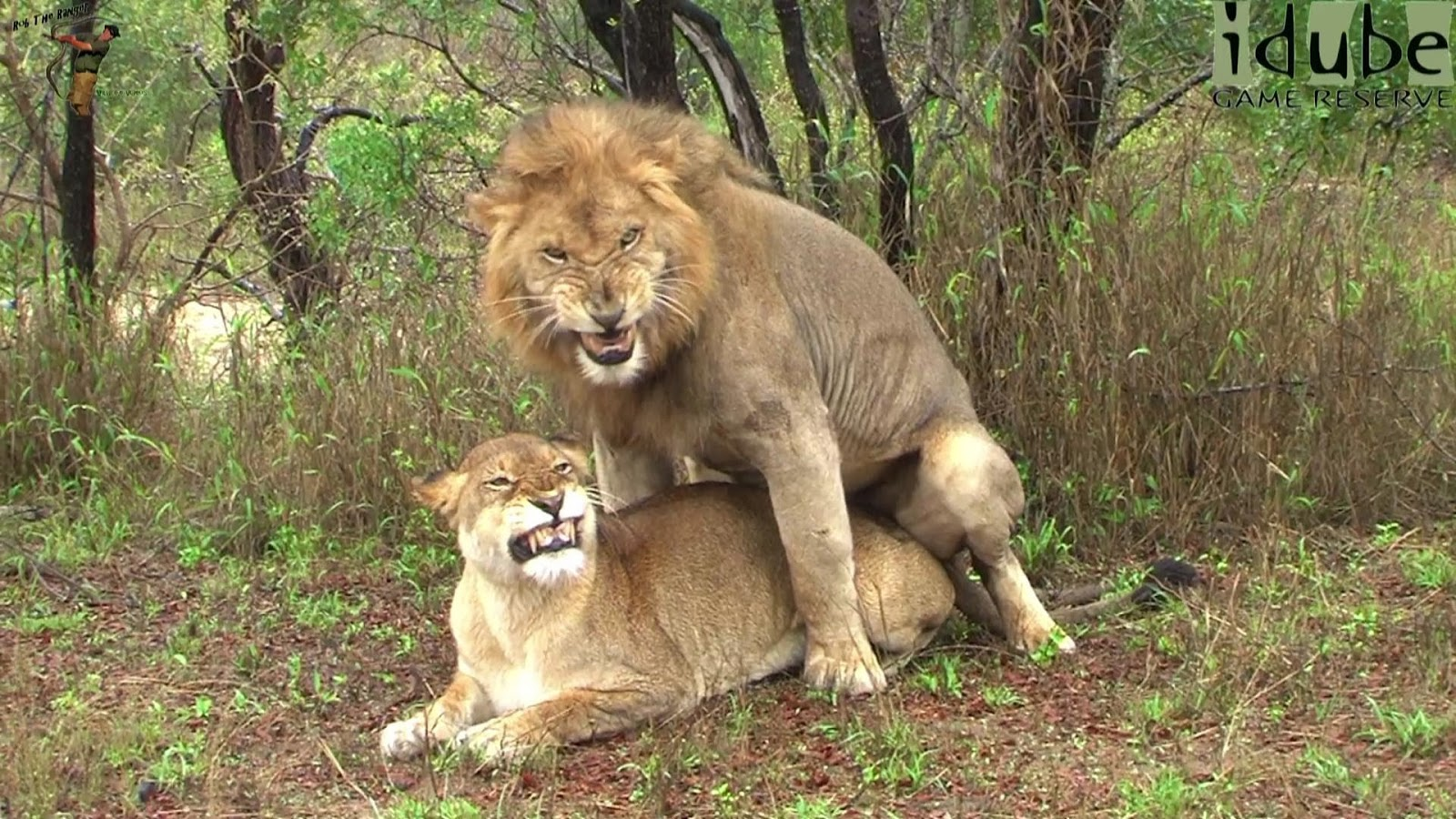 male lions having sex with humans jpg 853x1280