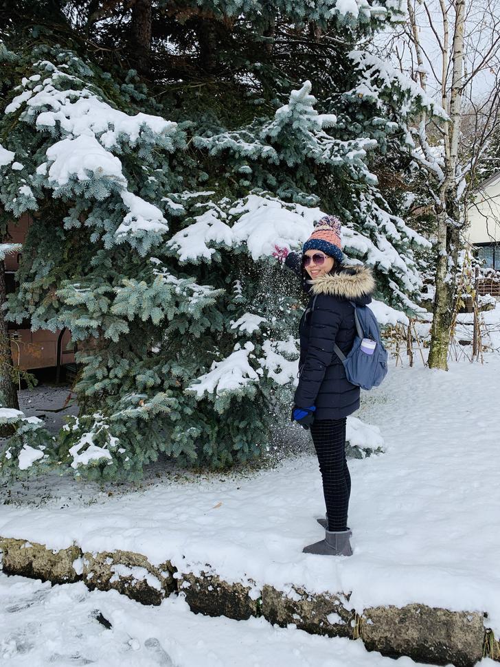 針葉類的植物真的很適合覆蓋雪