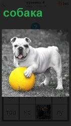 собака держит мяч