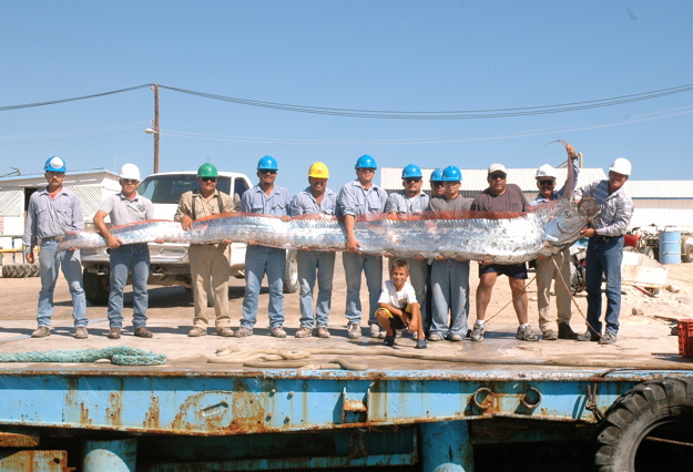 Big Fishes of the World: OARFISH (regalecus glesne) Oarfish 56 Ft
