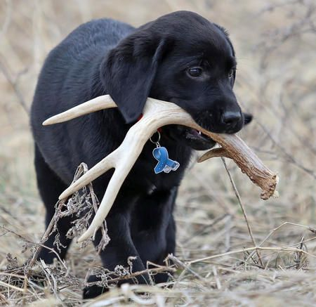 Top 5 Breeds That Love To Chew