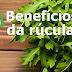 10 benefícios interessantes da rúcula