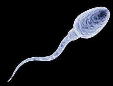 Gambar Sperma