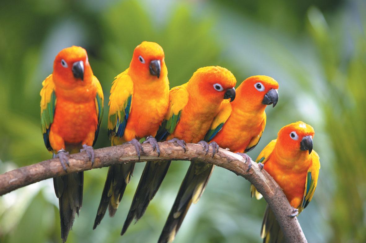 Desktop hd wallpapers beautiful birds hd wallpapers - Animal and bird hd wallpaper ...