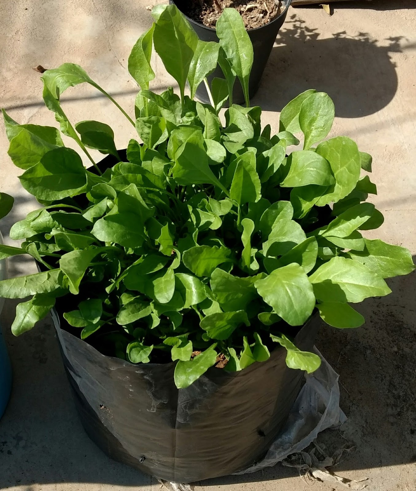 Garden Plants Nursery India Fertilizer Pots Bonsai Tools