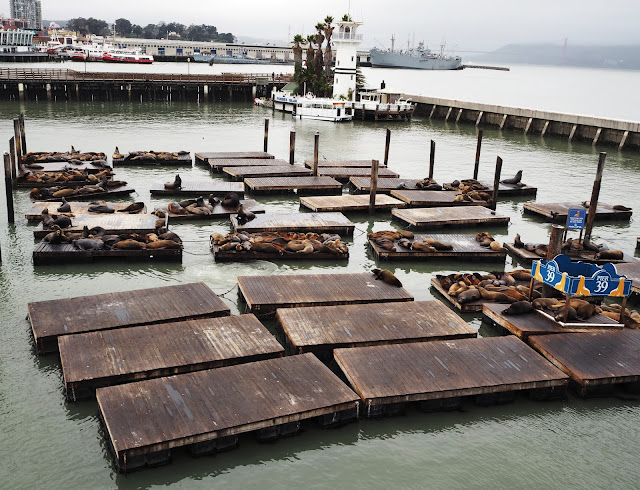 Lachtani na molu 39 // Sea lions on Pier 39
