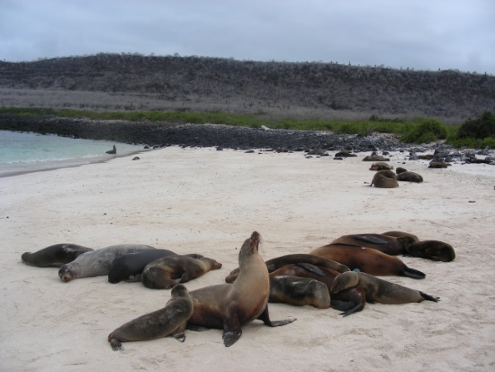 "A Darwinist called the Galapagos Islands a ""laboratory for evolution"". Wrong."