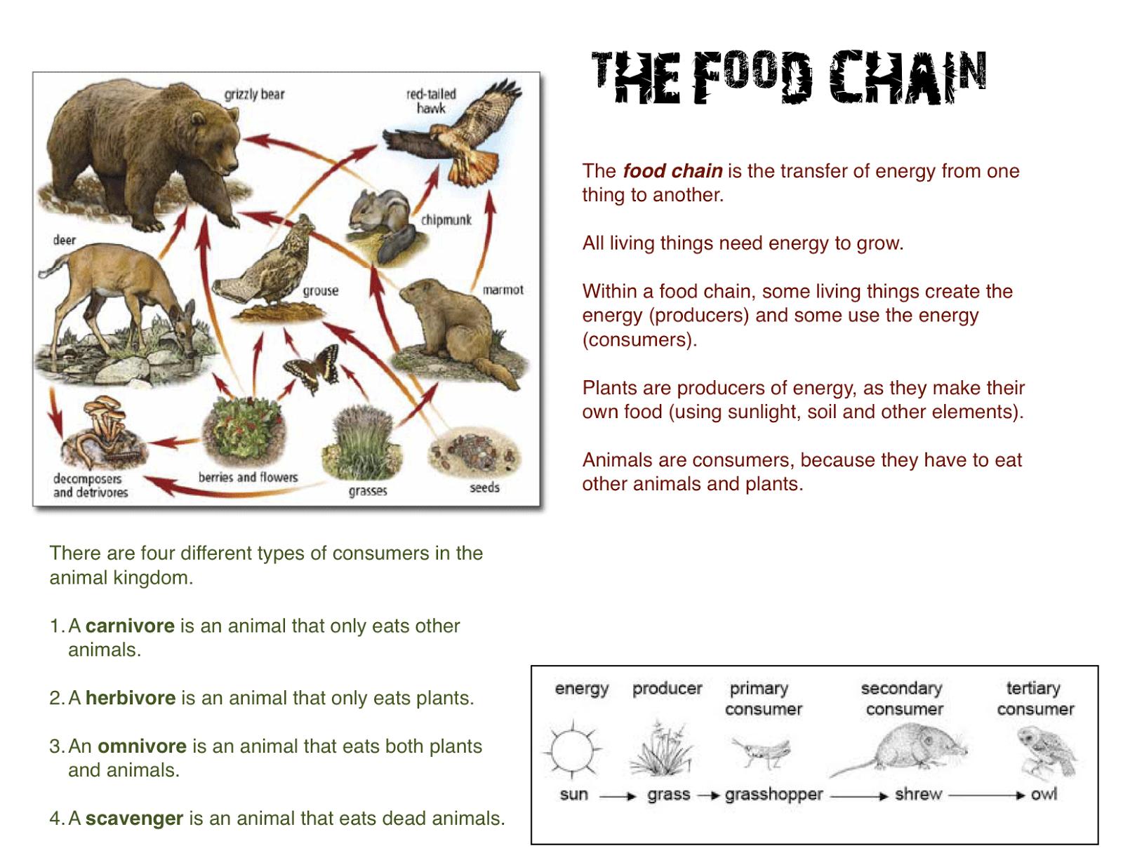 Pin Grassland Food Chain Web
