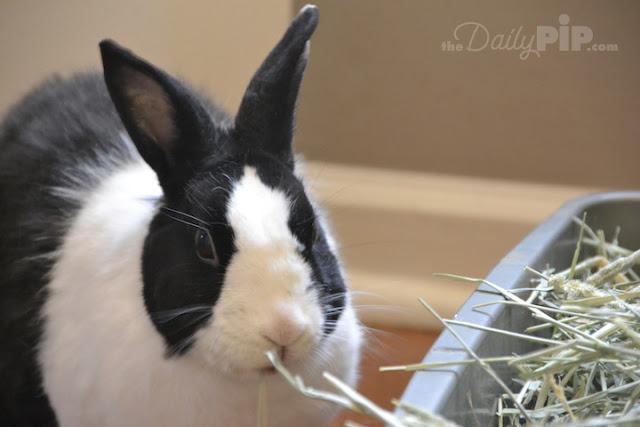 Top ten reasons that rescue rabbits rock