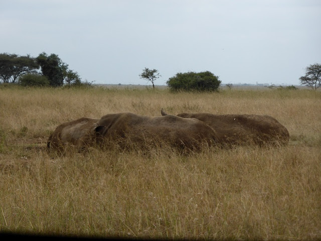 Nairobi National Park, rinocerontes negros
