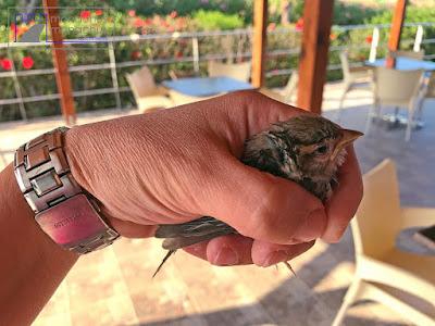 Rescued sparrow